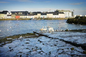 picture of claddagh  - broken ice on the bank of Corrib river and swans in Claddah - JPG