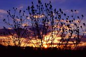 picture of illinois  - Brilliant colors of sunset silhouetted through prairie plants in northern Illinois.