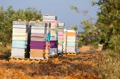stock photo of bee-hive  - Provence meadow with bee hives - JPG