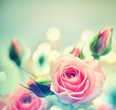 picture of toned  - Beautiful Pink Roses - JPG
