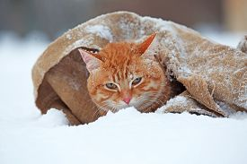 foto of blanket snow  - Cute red cat wrapped in blanket on snow background - JPG