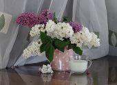 picture of jug  - Lilac bouquet in a transparent jug and a cup with milk - JPG