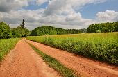 picture of dirt road  - dirt road winding between pastures to forests - JPG