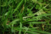 stock photo of cleanliness  - Macro of dew on green grass after the rain - JPG