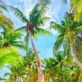 foto of palm  - Fresh green palm trees - JPG