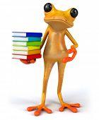 foto of orange frog  - Fun frog - JPG