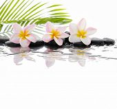 foto of drow  - Still life with Frangipani and palm on wet zen stones - JPG