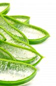 stock photo of aloe-vera  - Slice Aloe Vera  - JPG