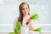 pic of oregano  - Young woman is planting basil chives and oregano - JPG
