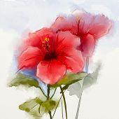 picture of hibiscus  - Watercolor painting red hibiscus flower  - JPG