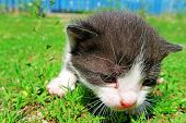 picture of kitty  - Cute Kitty with curious expression on the grass - JPG