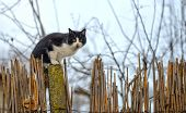 Cat On A Fence. Neighbors Cat Is Staring At Photographer. poster