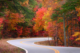 pic of fall leaves  - bright fall leaves on a s - JPG