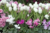 image of beautiful flower  - colorful spring flower garden - JPG