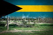 Trees Broken By Heavy Storms And Flag Of Bahamas. poster