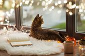 pets, christmas and hygge concept - tabby cat lying on window sill with book and garland lights at h poster