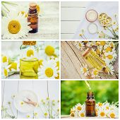 Collage Of Different Pictures Of Chamomile Flower Extracts. Homeopathy. Selective Focus. poster