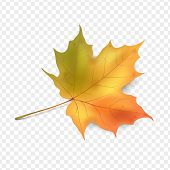 Maple Leaf On A Transparent Background. Autumn Leaf, Leaf Fall. Vector Illustration. Eps10 poster