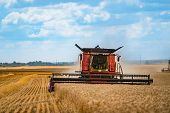 Combine Harvester Harvest Ripe Wheat On A Farm. Grain Harvesting Equipment In The Field poster