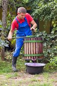 stock photo of wine-press  - Male Farmer using a wine press to crush grapes to make wine - JPG