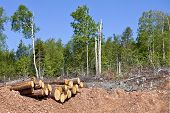 Depris and logs from clear cutting the forest.