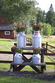 stock photo of olden days  - Milk churns displayed on the road side with flower arrangements outside a farm in Sweden - JPG