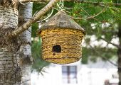 picture of manger  - A little manger for birds hanged to a coniferous tree at Chianale  - JPG