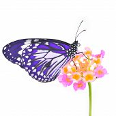 stock photo of purple sage  - Purple butterfly and colorful flower isolated on white background - JPG