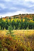 Fall forest with colorful trees and new saplings