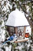 stock photo of blue jay  - Blue jay and cardinal birds on bird feeder in winter - JPG