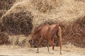 image of horses ass  - Old horse of Russian Don breed near a big haystack - JPG