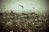 picture of polution  - Apocalyptic scene of birds flying over the dump  - JPG