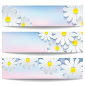 ������, ������: Set Of Beautiful Banners With White Flower Chamomile