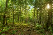 image of acadian  - Moose Horn Trail Path  - JPG
