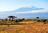 pic of kilimanjaro  - Snow on top of Mount Kilimanjaro in Amboseli - JPG