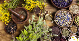image of century plant  - Natural remedy and mortar - JPG