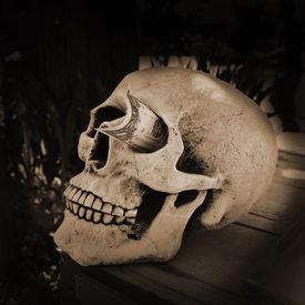 stock photo of eye-sockets  - Skull with a dollar stuck in his eye socket - JPG