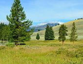 picture of blacktail  - Blacktail Plateau in Yellowstone National Park Wyoming in summer - JPG