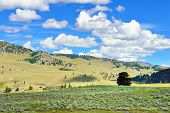 picture of lamar  - Lamar Valley in Yellowstone National Park Wyoming in summer - JPG