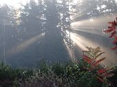foto of bohemia  - Mystical morning sunrise South Bohemia Czech Republic - JPG