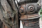 picture of creeper  - Detail with a wild creeper plant growing around an old rusty pole - JPG