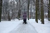 stock photo of buggy  - The Woman walking with buggy in winter park - JPG
