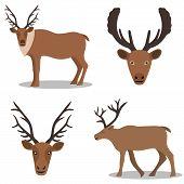 stock photo of deer head  - Deer and their head  - JPG