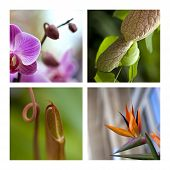 picture of carnivorous plants  - Collage of exotic and carnivorous plants in a green house - JPG
