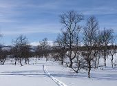 picture of nordic skiing  - Sunny days in the Scandinavian mountains - JPG