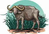 image of herbivore animal  - Vector illustration of an animal  - JPG