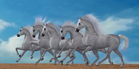 image of workhorses  - A herd of beautiful white Arabian horses in a wild desert environment - JPG