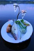picture of catching fish  - Fresh fish catch  - JPG