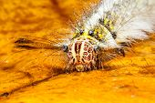 picture of worm  - Woolly worm shirted ghost in the garden - JPG
