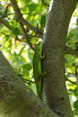 stock photo of lizard skin  - Beautiful lizard sitting on a tree in the wild - JPG